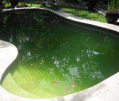 green-swimming-pool-bali_large