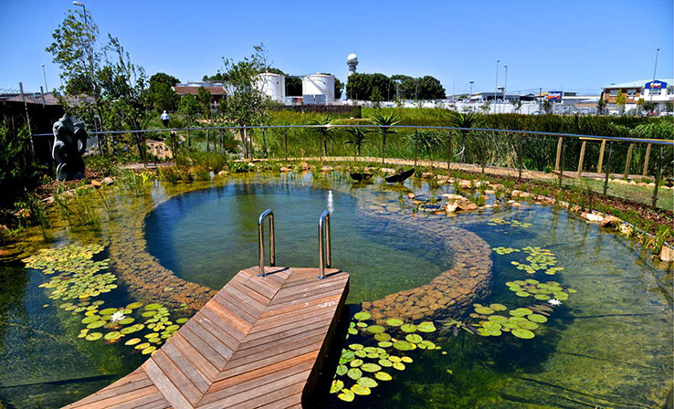 eco friendly pool.jpg