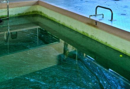 green pool algae
