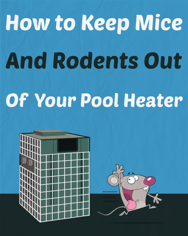 Keep Mice Rodents Out Heater Swimming Pool.jpg